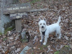 Bongo, Ken's canine companion on the trail at Watoga State Park