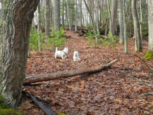 Bongo and Daisy on the Honeybee Trail Watoga State Park