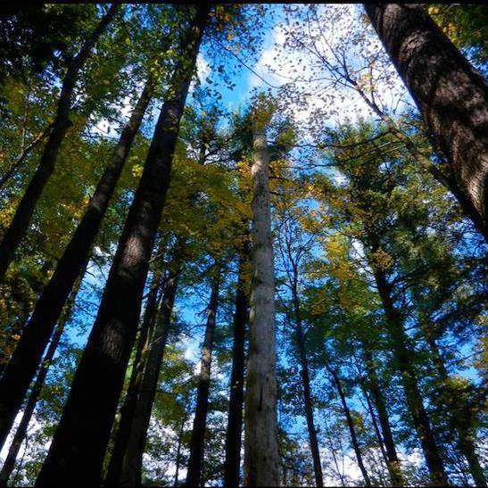 Watoga Is Now Part Of The Old Growth Forest Network