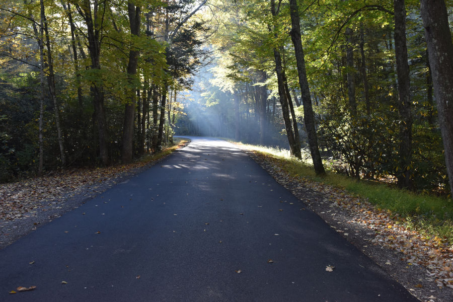 Some things never change at Watoga. These early morning rays are near the Island Lick Cabin area and Bear Pen Trail. Views such as these near the Island Lick Cabin area and Bear Pen Trail. 📸: John C. Dean, October 7, 2020.