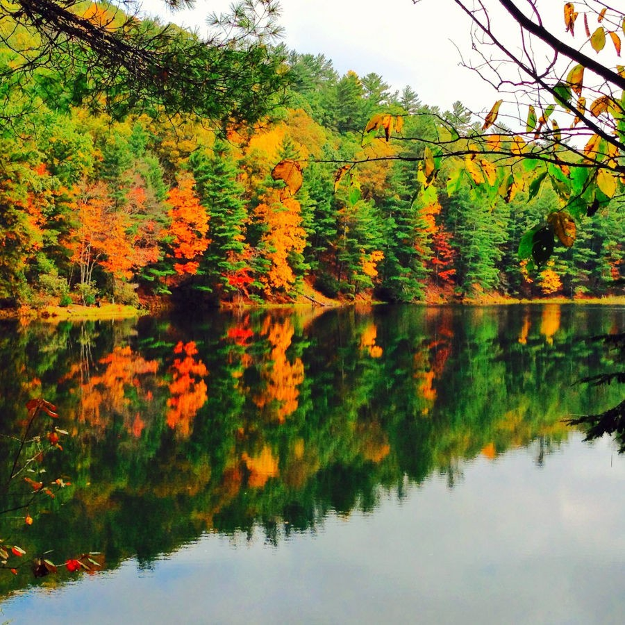 Tall tees of green, red, orange and yellow are captured in a reflection on Watoga Lake. Reflections on Watoga Lake on a fall day. Photo courtesy of Tana Shifflett - Facebook.